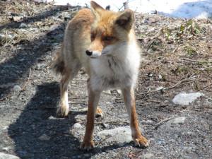 大谷原に着くと、かわいらしい動物がお出迎え。