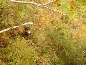 急傾斜の藪でがんばる岩佐さん
