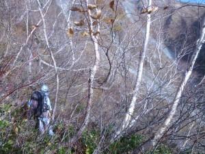 下又白池側の斜面の藪に突入