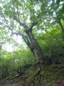驚きの巨木が出迎えてくれた。癒やしのひととき