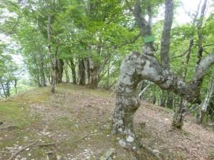 池木屋山頂上。不思議な形の木が多い