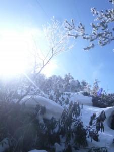 雪が出てきても油断は禁物。シャクナゲに乗っかっているだけですぐに踏み抜く。急斜面で何度もひっくり帰りそうになった