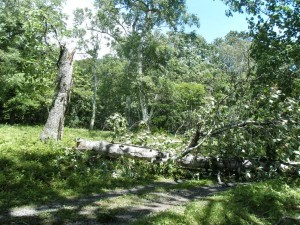 真っ二つに折れた大木。登って行く時は大丈夫だったのに…。風の力は、凄いっす