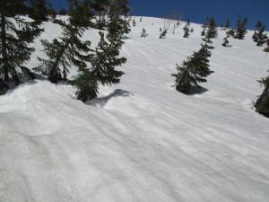 スキーで滑ったら気持ちよさそうな斜面。(写真では緩傾斜に見えますが、そこそこ傾斜あります。)